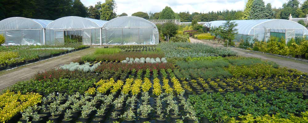 Springhill Nurseries Wholesale Dunecht Westhill